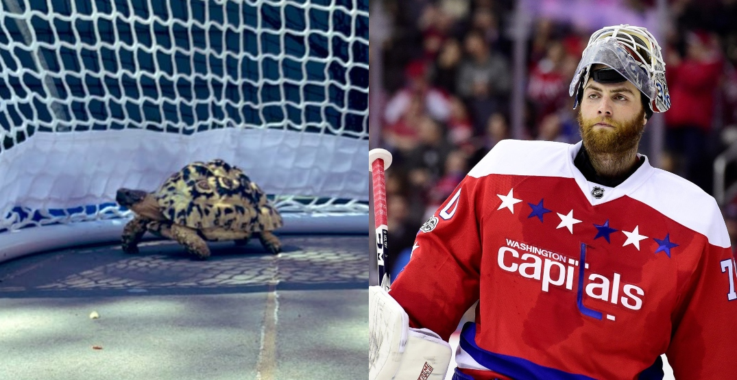 New Canucks goalie Holtby can't get his turtles across the border