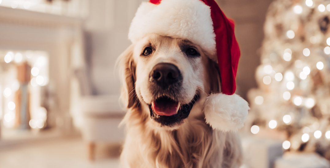 This adorable advent calendar is the perfect holiday treat for your pup