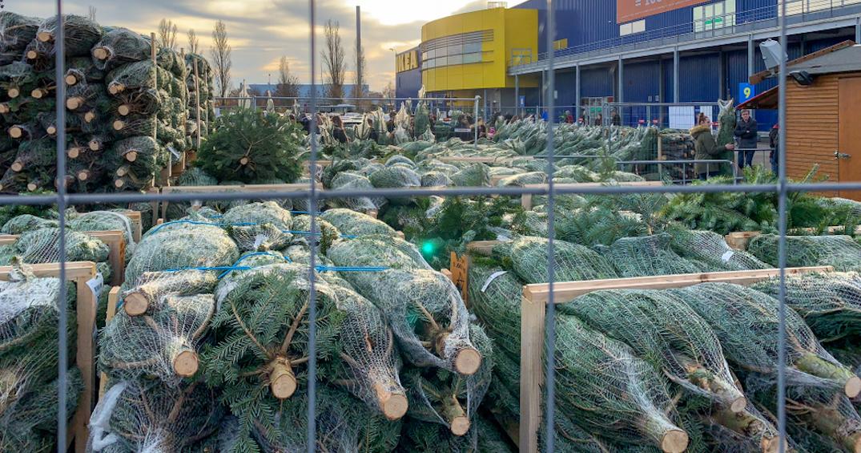 IKEA donates and gives away free Christmas trees at its closed GTA location