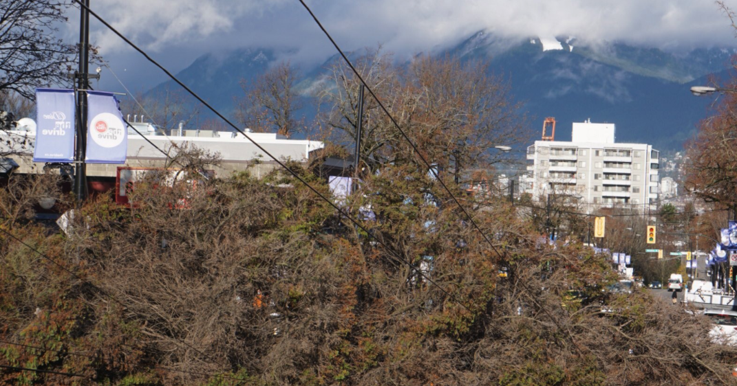 Windstorm results in fallen trees, power outages across Metro Vancouver (PHOTOS)