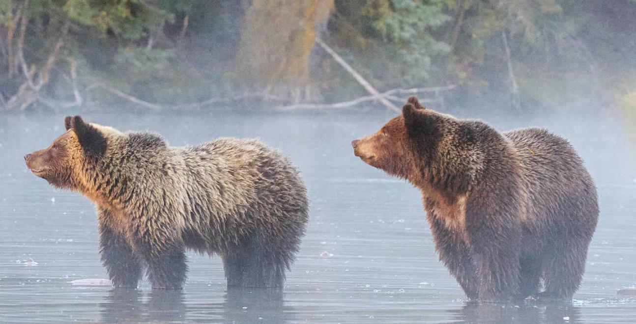 Exposed Wildlife Conservancy