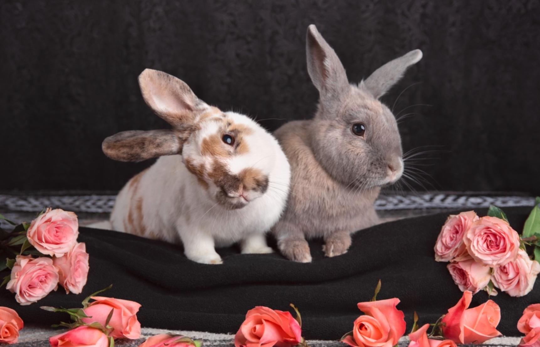 Rabbitats