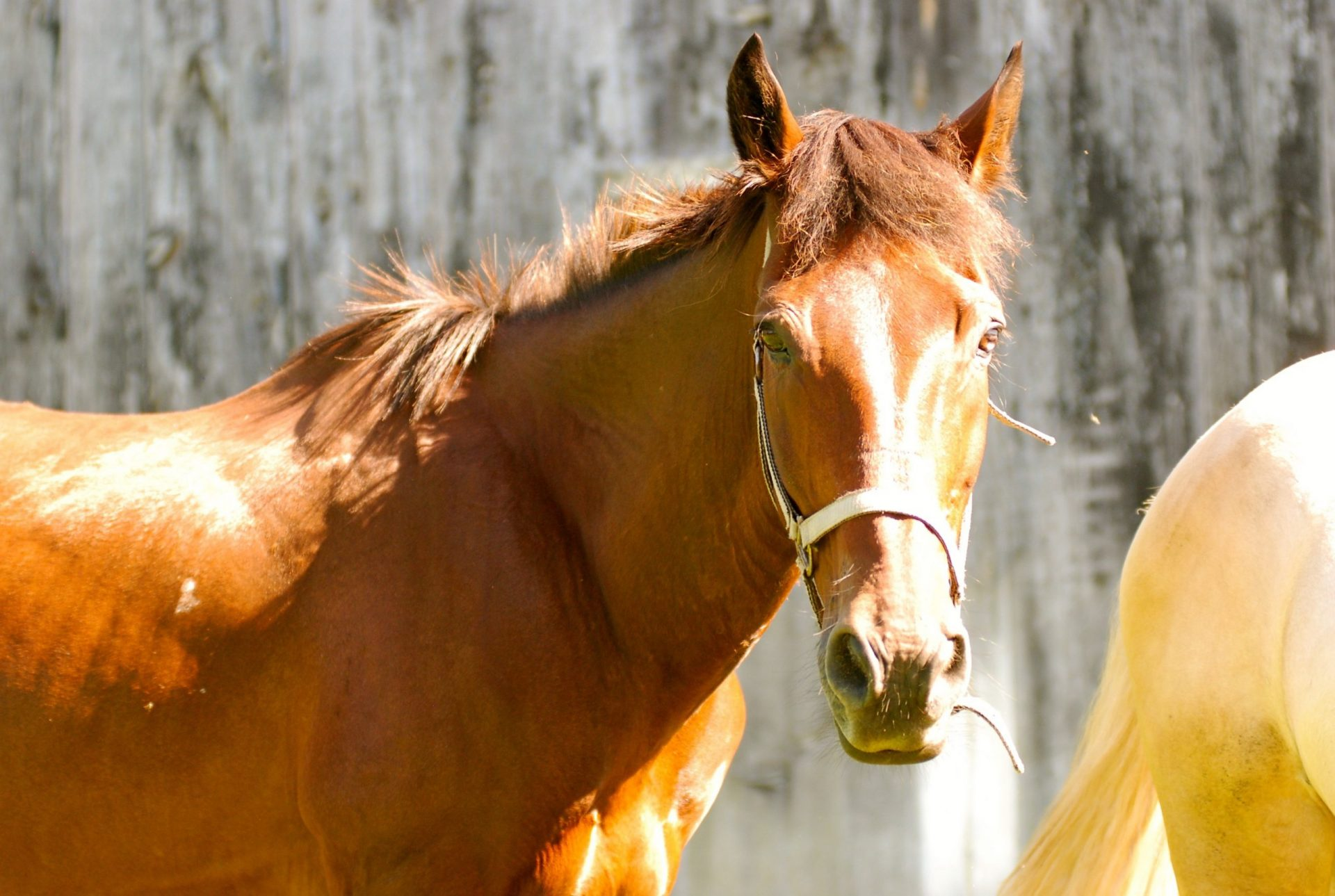 Canadian Horse Rescue and Re-Homing Society