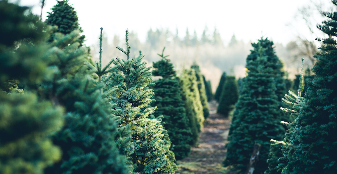 Montreal company will deliver Christmas trees right to your door