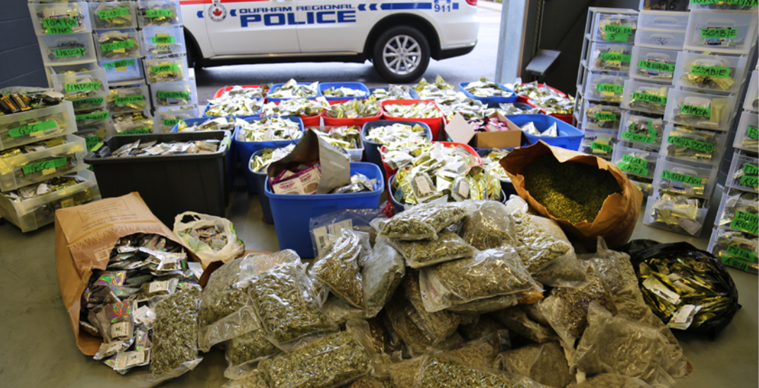 Police seize over $2M in illegal cannabis and two houses in GTA drug raids