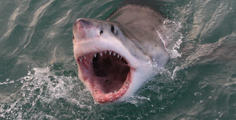 Shark bites surfer's leg in rare attack off Oregon beach