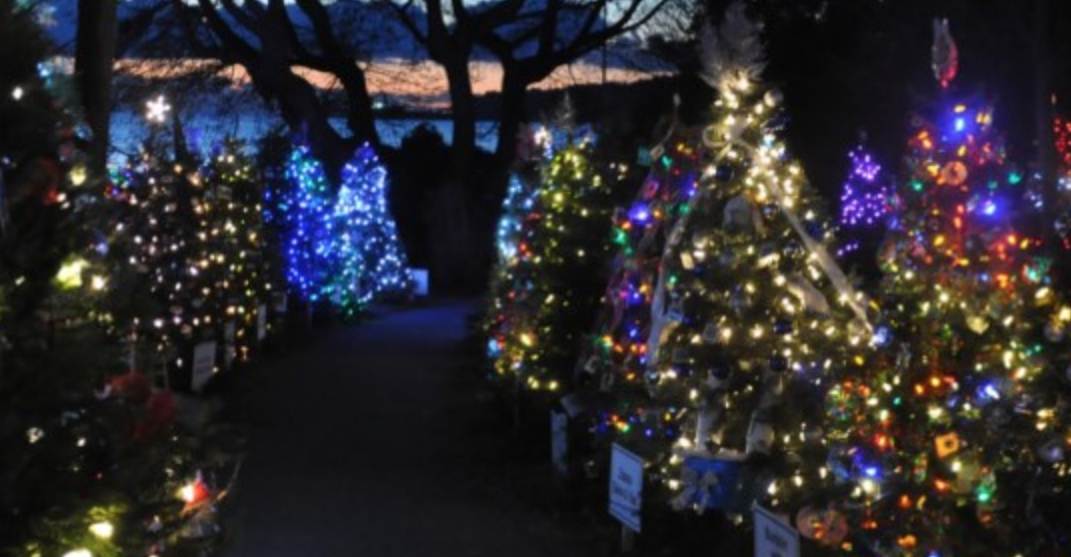Over 100 stunning Christmas trees are lit up in West Vancouver this month