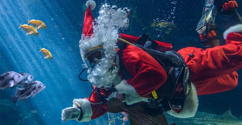 "Vancouver Aquarium to host virtual ""Scuba Claus"" event"