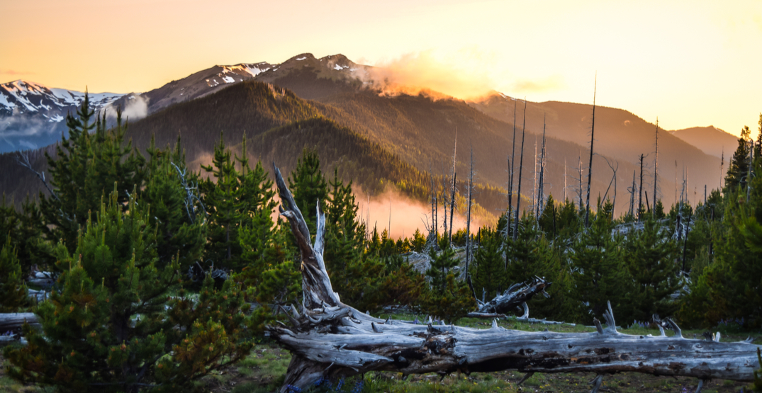 7 great hikes near Seattle to help kick-start your new year