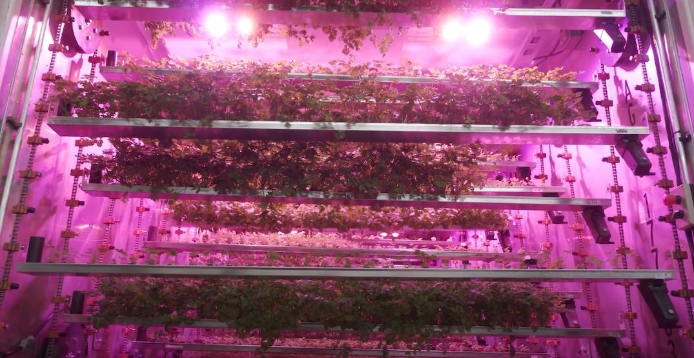 CubicFarm cultivator vertical farming machine