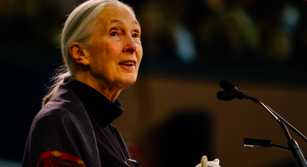 """Jane Goodall pleads for """"lonely"""" Canadian elephant to be moved to US sanctuary"""