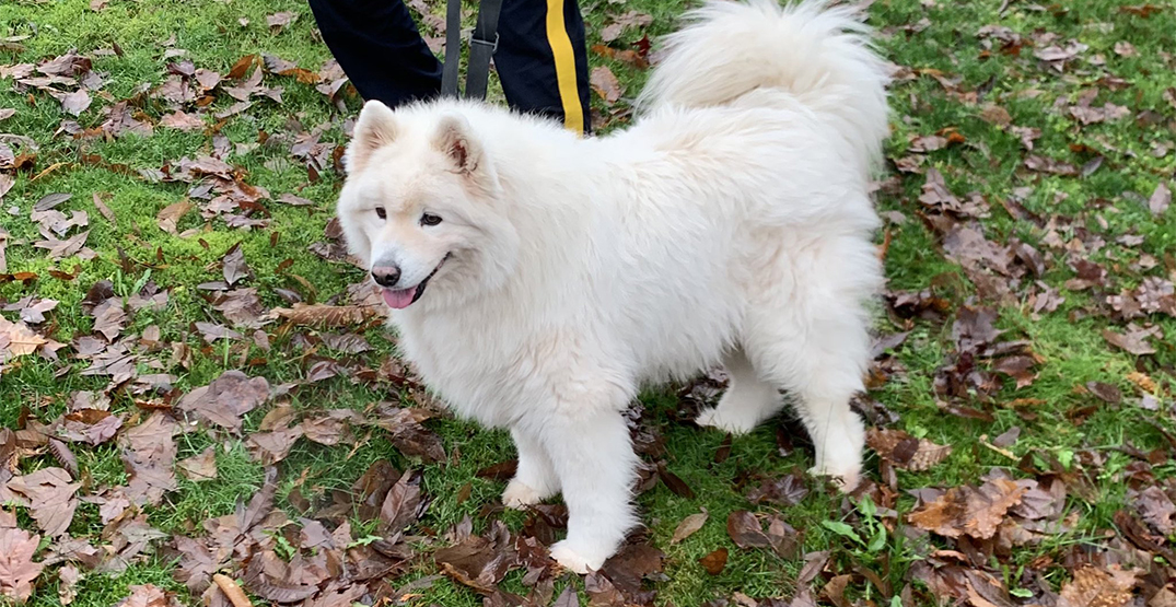 Adorable dog found at Burnaby police station reunited with family