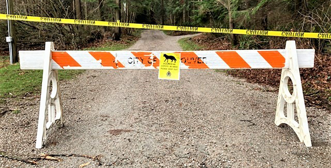"""Multiple Stanley Park trails closed after reports of """"aggressive coyotes"""""""
