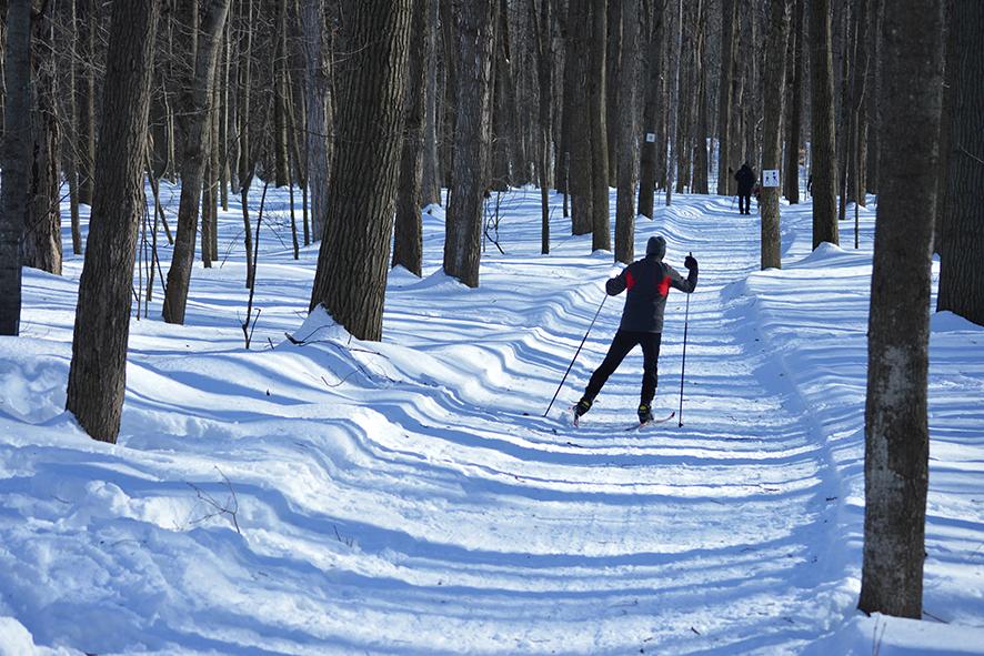 mcgill cross country ski