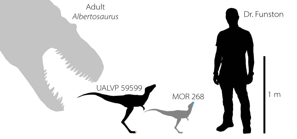 Babyrex silhouette to scale copy