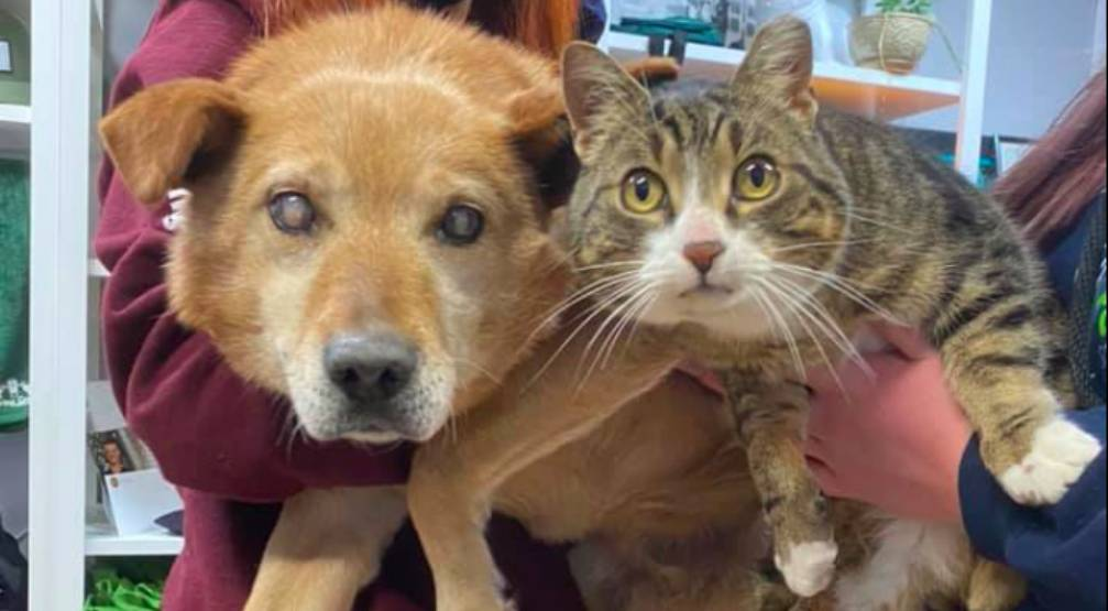 Adorable blind dog and seeing eye cat looking for forever home