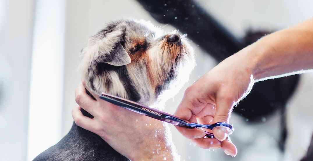 Ontario reopens pet grooming services under strict guidelines
