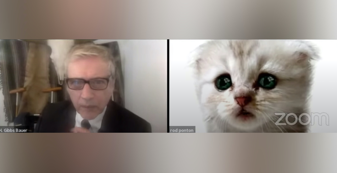 """""""I'm not a cat"""": Zoom filter turns lawyer into cat during video meeting"""