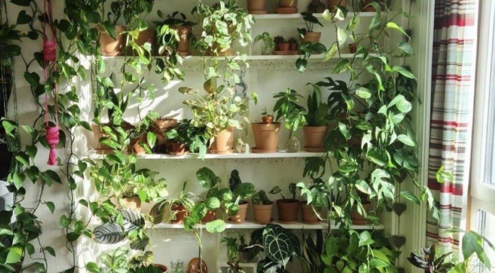 10 places to buy great indoor plants in Toronto
