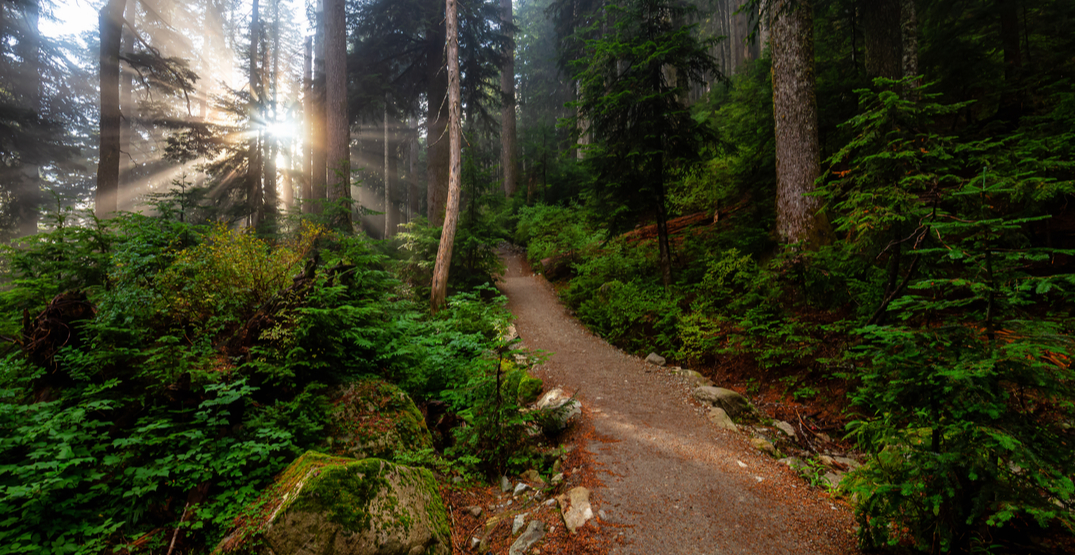 28 easy trails to explore in Metro Vancouver