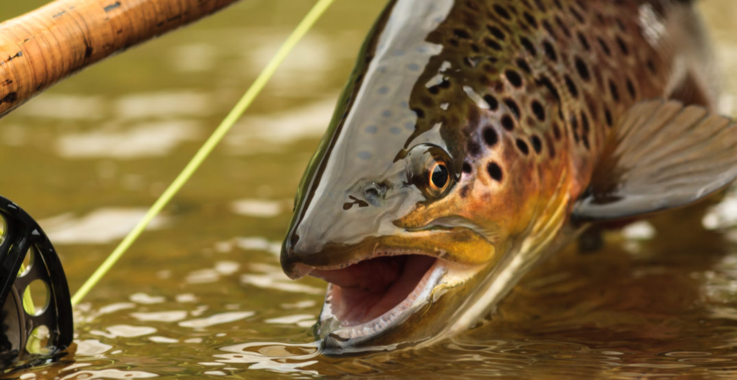 Fish your own food at Gold Creek Trout Farm in Woodinville