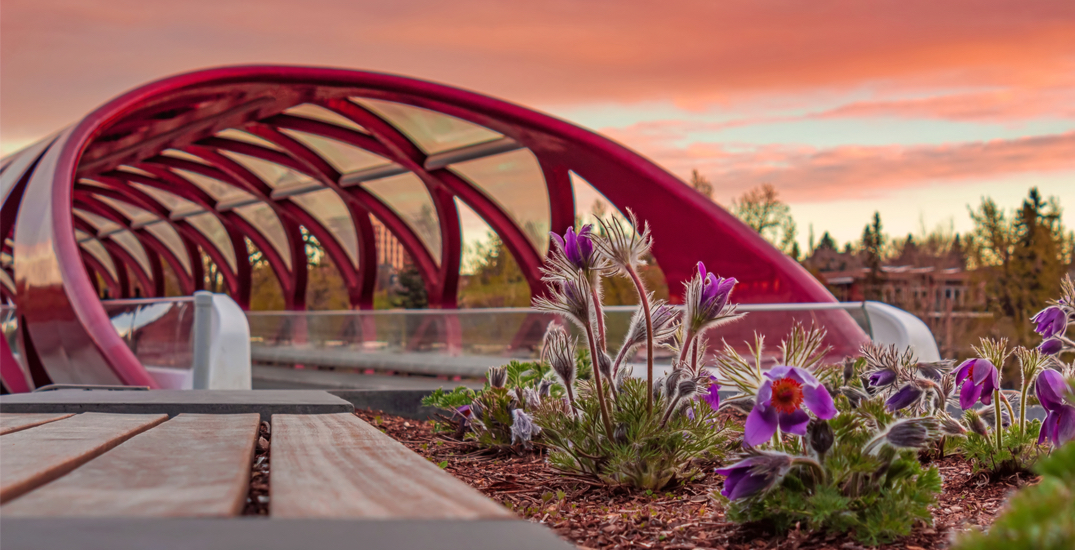 Here are 17 free things to do in Calgary this spring