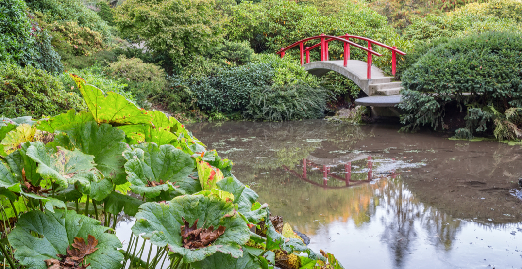 Witness the spectacular blooms at Seattle's Japanese Garden this month