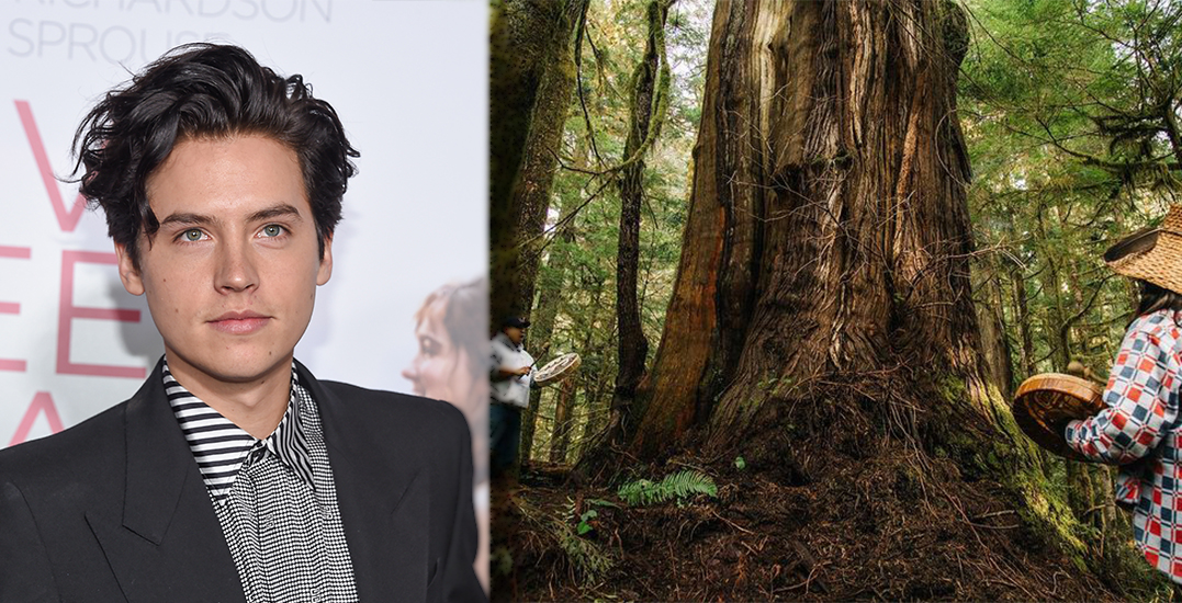 Cole Sprouse photographs old-growth BC forest at risk of being logged