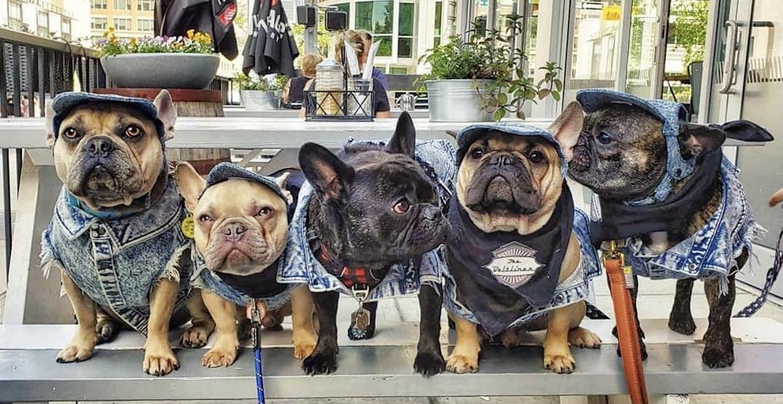 Best dog-friendly patios in Calgary