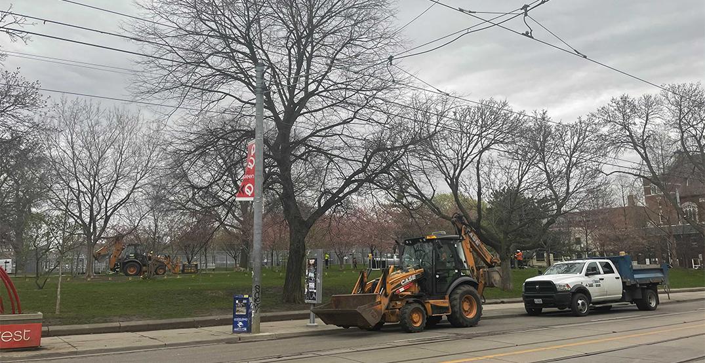 Toronto fences off Trinity Bellwoods cherry blossom trees