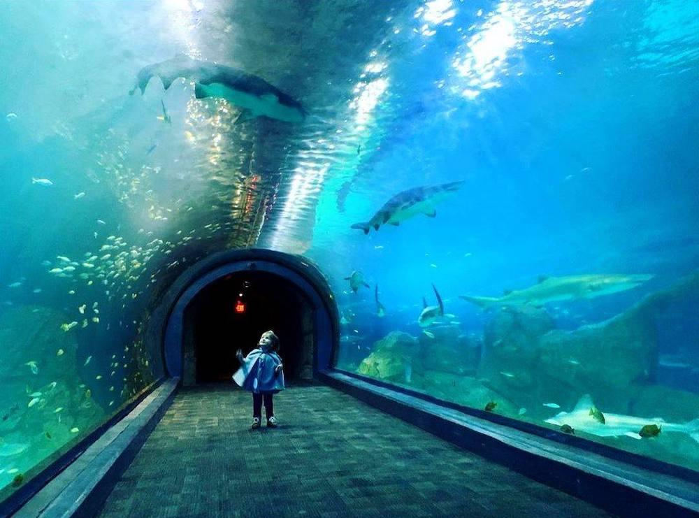 adventure aquarium new jersey