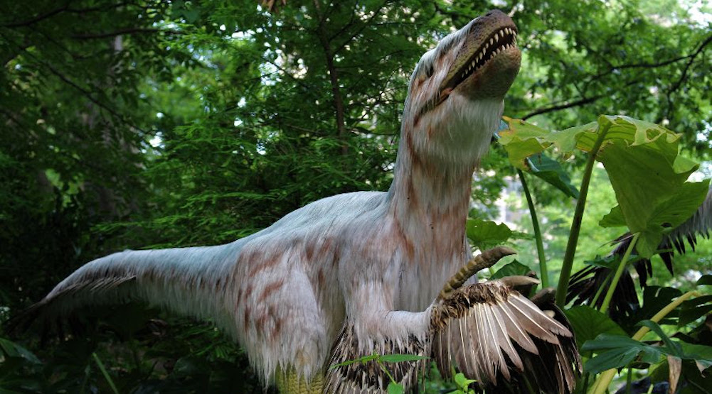 Meet dozens of real-life dinosaurs at the Woodland Park Zoo's newest exhibit