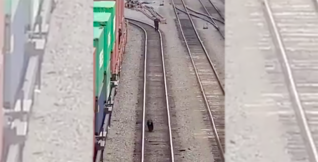The wrong side of the tracks: Bear spotted in downtown Vancouver (VIDEO)