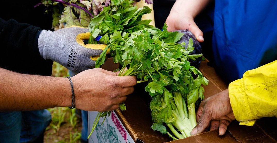 Purchase edible flowers and plants next week at Rainier Beach