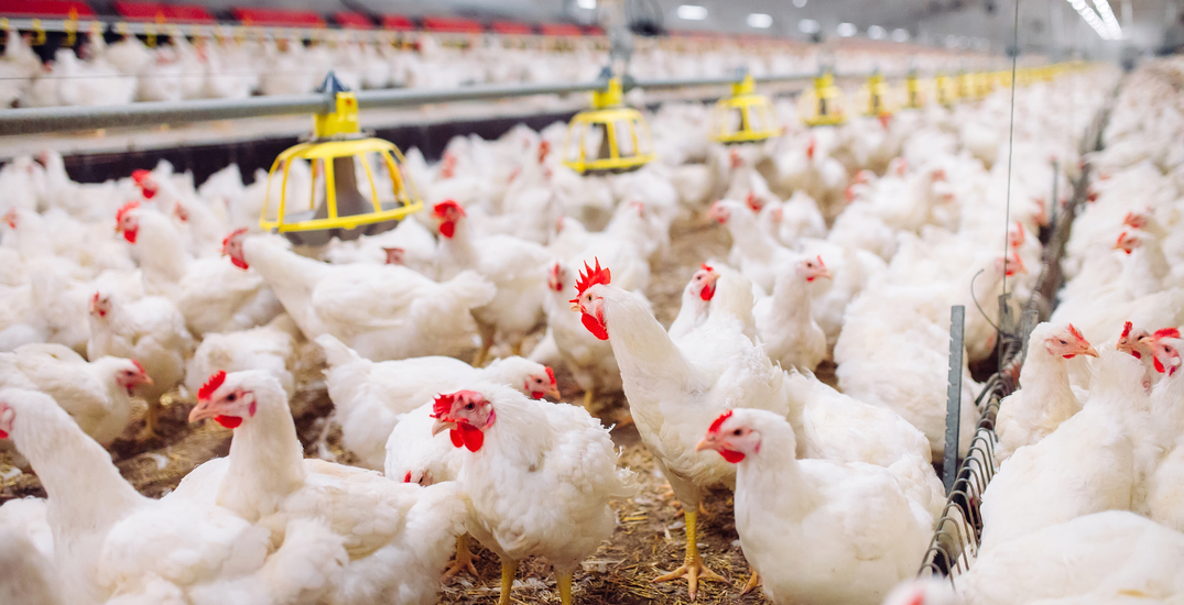 COVID-19 outbreak declared at Surrey poultry plant, 29 staff test positive
