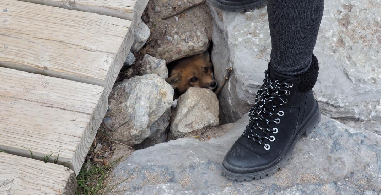 Two baby foxes found dead near den at Woodbine Beach Boardwalk