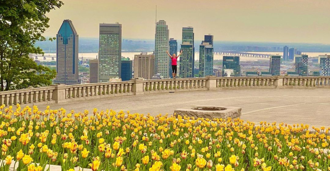 Tulips are in full bloom at the top of Mont-Royal (PHOTOS)