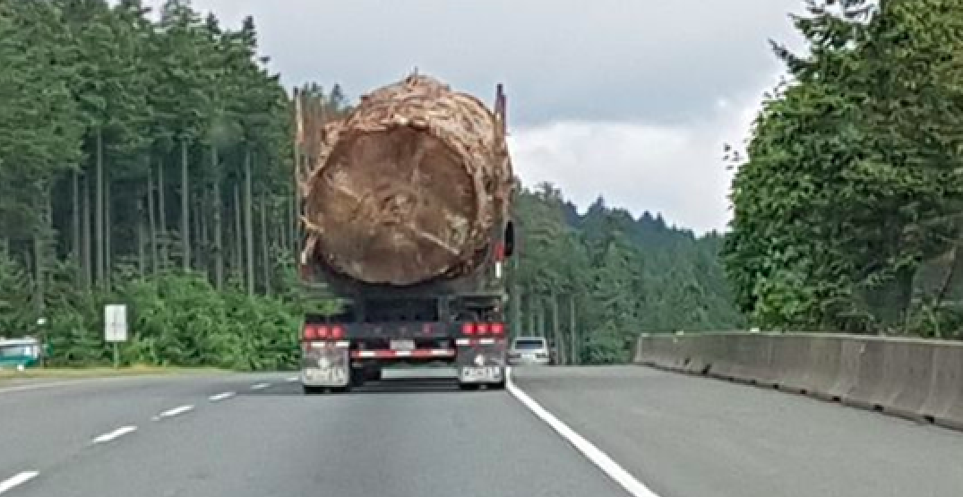Ministry says massive tree in viral photo was cut before new regulations took effect