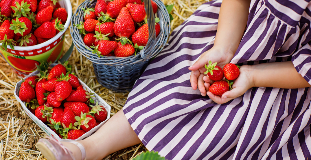 7 u-pick farms to get your own berries around Seattle this summer