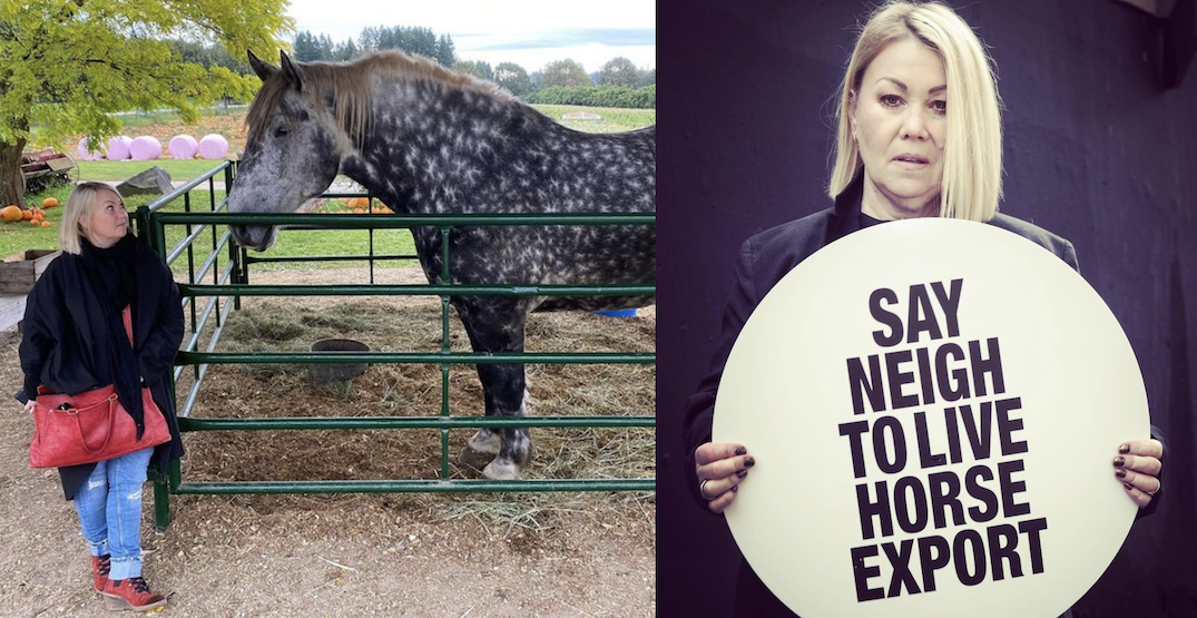 The dark side of agriculture: Jann Arden petitions to end overseas horse transport