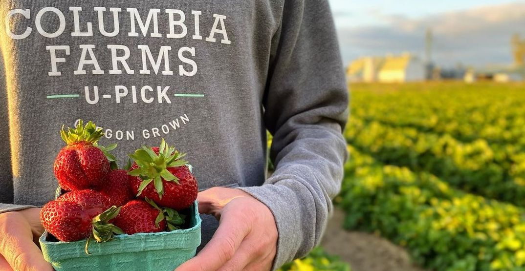 7 u-pick farms to get your own berries around Portland this summer