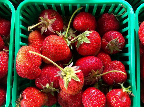Here are the must-visit farms for strawberry picking near Toronto