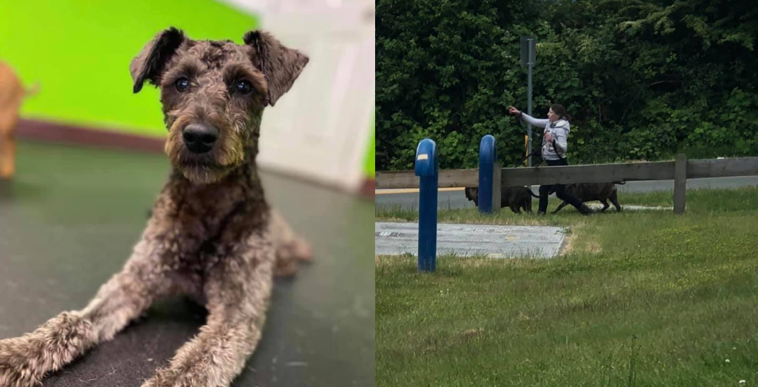 """""""Unimaginable loss:"""" puppy killed by two dogs in Metro Vancouver Park"""
