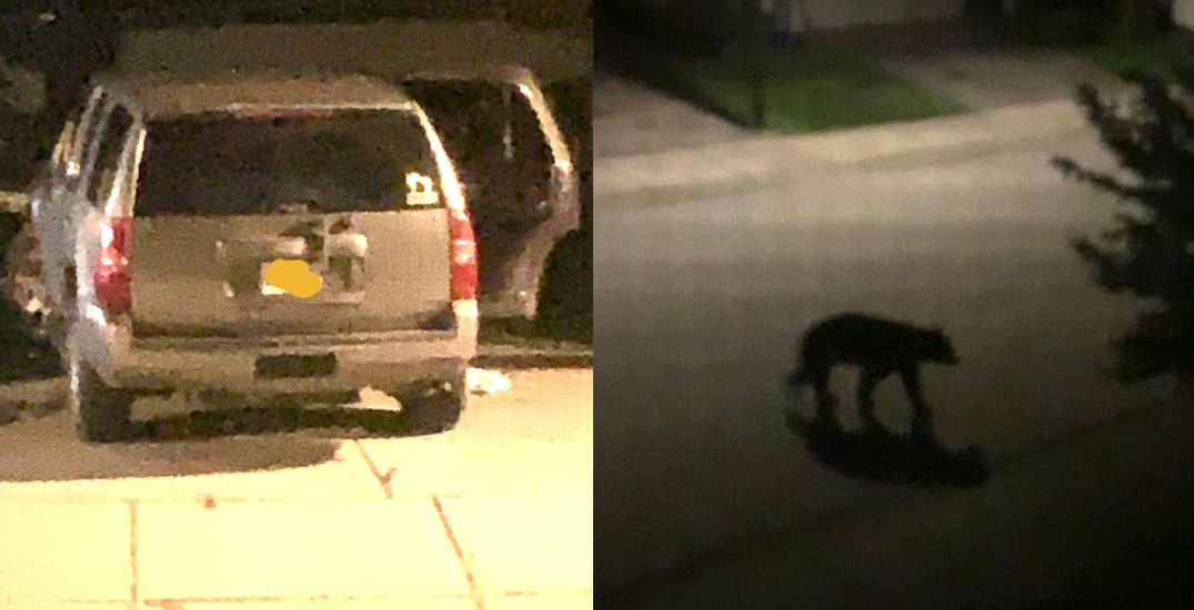Two bears broke into a Metro Vancouver family's car while they slept