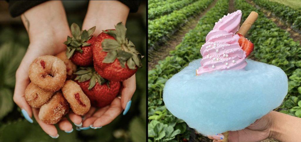 Maan Farms Strawberry Days