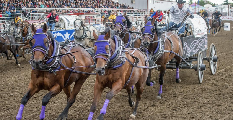 Here's where you can watch chuckwagon races near Calgary this summer