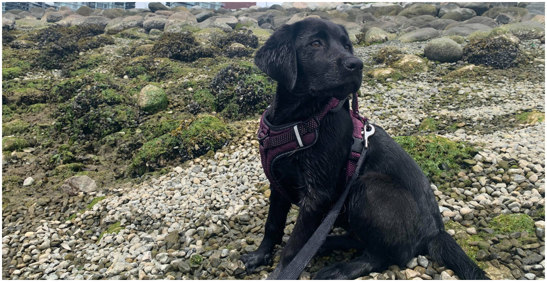 Owner suspects drug poisoning killed puppy after visit to Olympic Village park