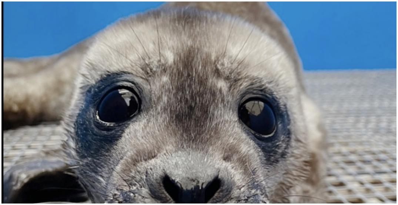 Vancouver Aquarium's rescue centre kicks off seal pupping season