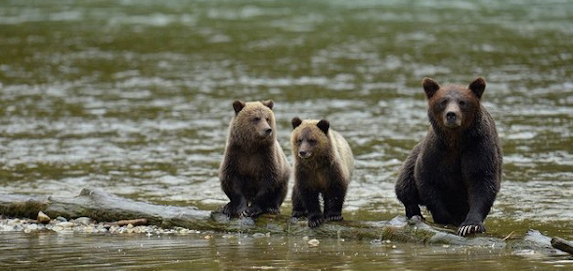 Bucket List BC: 5 ultimate Indigenous wilderness adventures