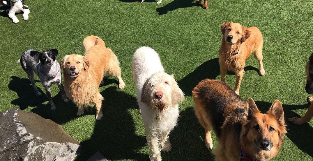 8 places to board your dog in Seattle when you're on vacation